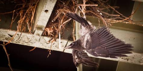 Vogel unter einem Bahnhofsdach