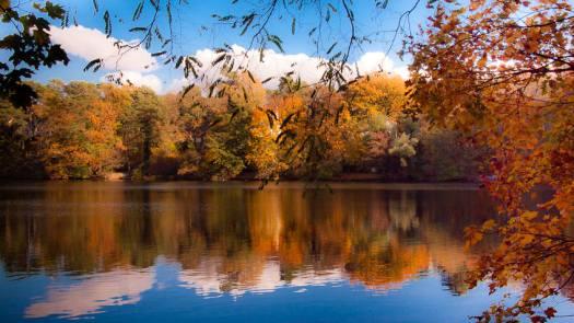 Herbstlicher Wald spiegelt sich in einem See