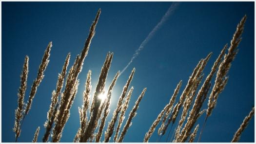 Unbarmherzig knallt die Sonne vom blauen Himmel - Foto: h|b