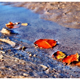 Herbst in Warnemünde