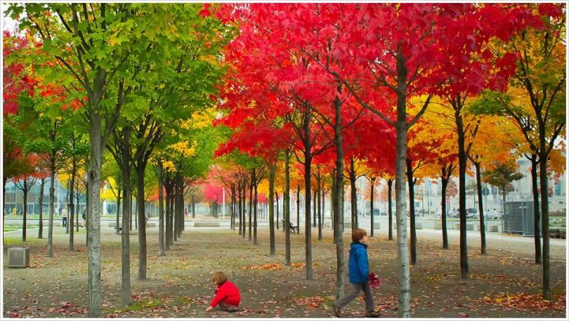 Herbstliches Farbenspiel - Foto: h b