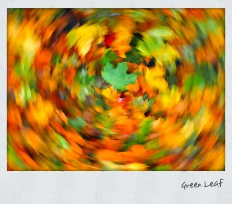 Der Herbst im Wirbel der Farben - Foto: hb