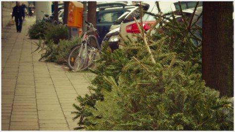 Friedhof der Weihnachtsbäume - Foto: h|b