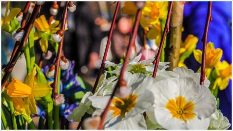 Frühlingsblumen am Schlachtensee- Foto: h|b