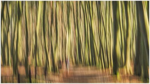 Waldimpressionen zwischen Warnemünde und Wilhelmshöhe - Foto: h|b