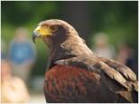 Klarer Blick auf den Falkner - Foto: h b
