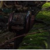Moos auf der früheren Stromschiene - Foto: h|b
