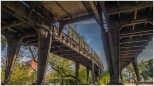 Die bewachsene Hochbahn auf dem Weg zur Ringbahn - Foto: h b