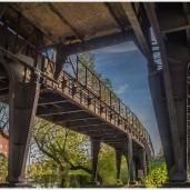 Die bewachsene Hochbahn auf dem Weg zur Ringbahn - Foto: h|b