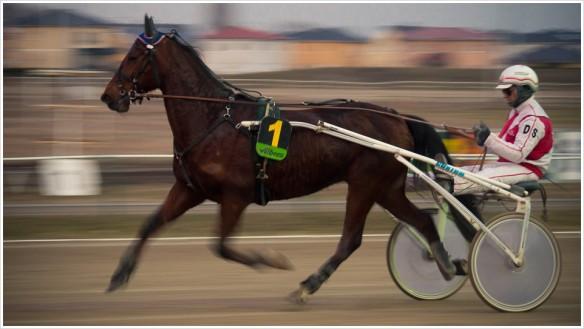 Die Nummer 1 siegt im ersten Rennen - Foto: h|b