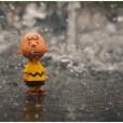Der kleine Charlie steht im Regen - Foto: h|b OM-D E-M5 - 12-40 2.8 PRO