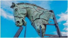 Pferdekopf - Foto: h b [Olympus OM-D E-M5, 12-40/2.8 Pro, 17mm / f.5,6 / ISO 200]