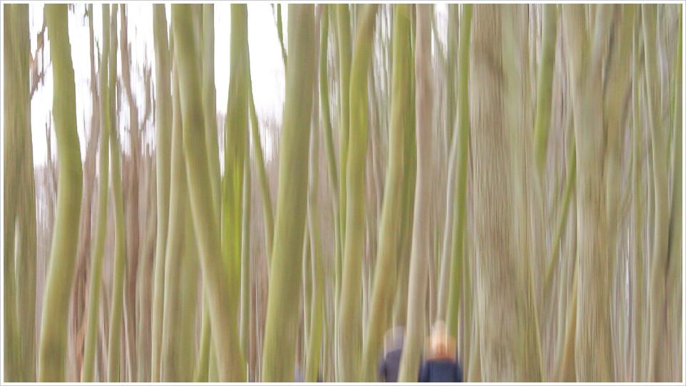 Verwischte Bäume im Wald von Warnemünde