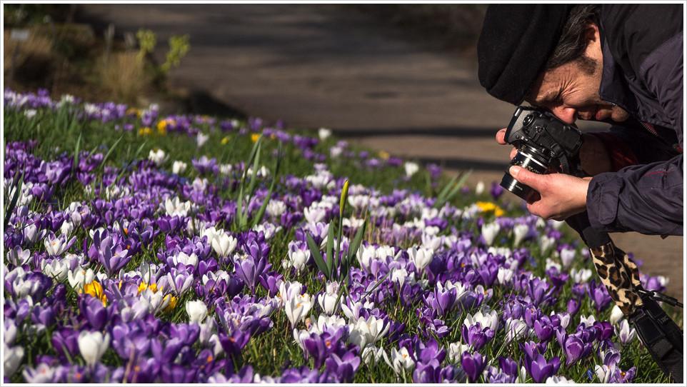 Fotograf beim fotografieren von Blumen