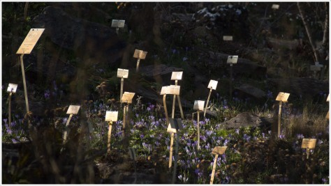 Botanische Schilder im Steingarten