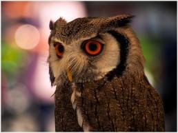 Diesen Augen entgeht nichts - Foto: h|b