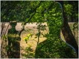 Waldgeister - Foto: h|b