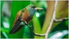 Kleiner Kolibri - Foto: h b