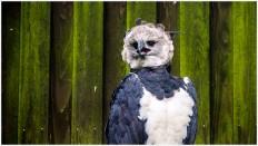 Der Endgegner, die Harpyie - Foto: h b