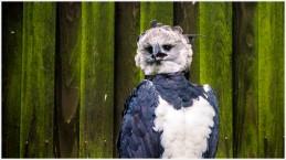 Der Endgegner, die Harpyie - Foto: h|b