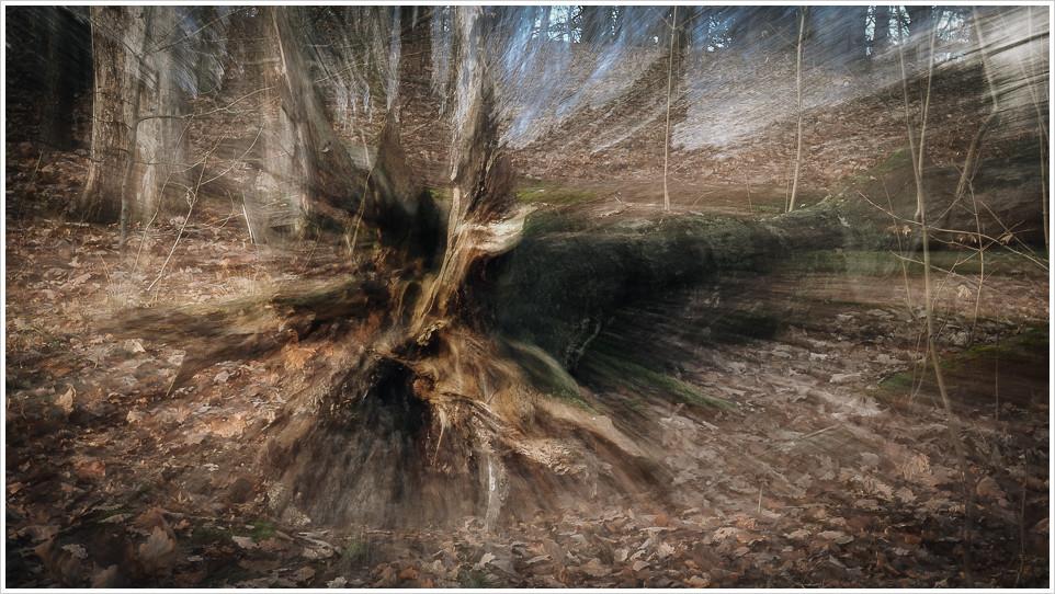 Toter Baum am Schlachtensee - Foto: h|b