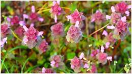 Blumenwiese - Foto: h|b