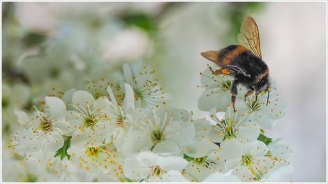 Besuch einer Blüte - Foto: h|b