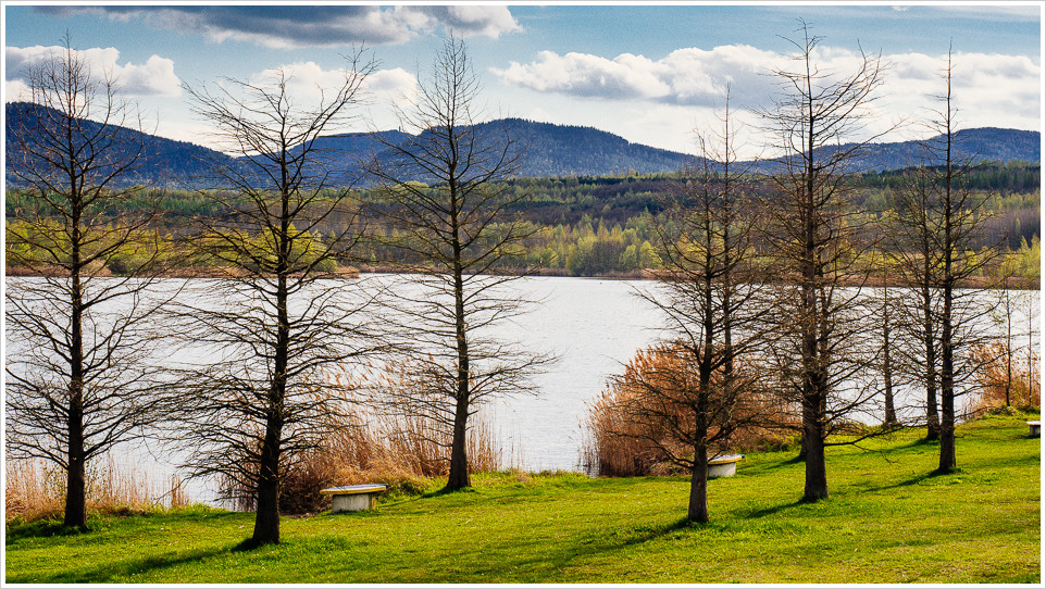 Bäume am Olbersdorfer See