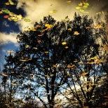 Herbstliches Spiegelbild - Foto: h|b