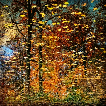 Abstraktes im Herbst - Foto: h|b