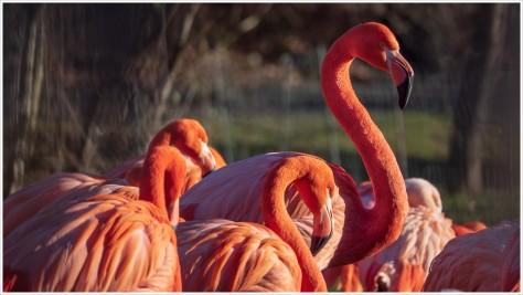 Flamingos im Tierpark Berlin