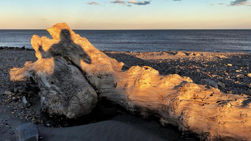 Schattenselfie auf einem toten Baum am Meer