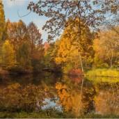Herbstlicher Tiergarten in Berlin - Foto: h|b