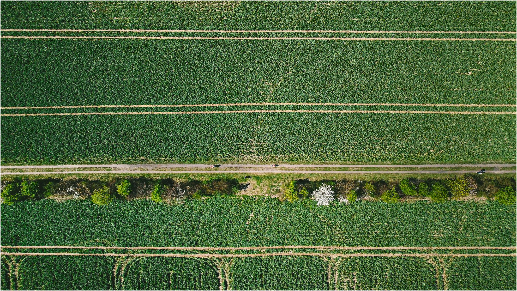 Linien im Feld