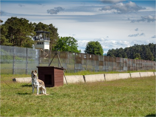 Grenzzaun mit Wachhund