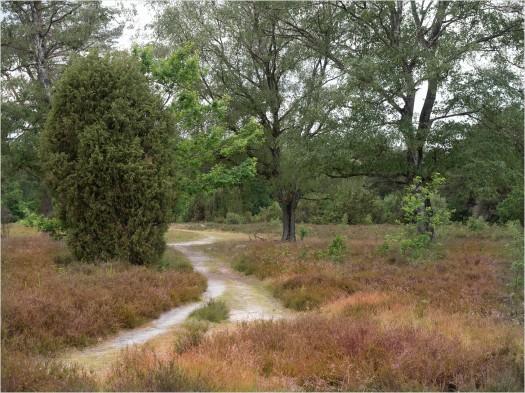 Heidewege