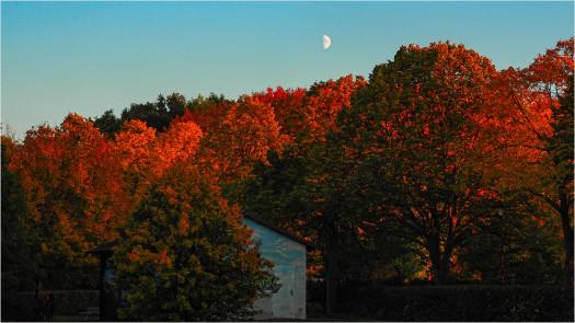 Mondaufgang über Herbstwald