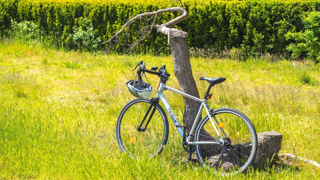 Rennrad steht an einem Baum