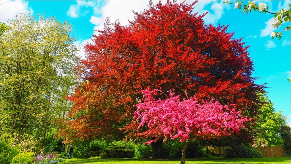 Farbenfrohe Bäume im Garten des Cafes Lindahof